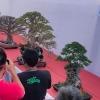 ratusan-penggemar-bonsai-pamerkan-hasil-kreasi-di-ngawi
