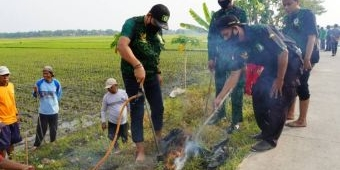 Amankan Sektor Pangan, GPK Jombang Bantu Petani Gropyokan Tikus