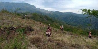 Gandeng Saka Wanabakti, Perhutani Kediri Tanam Biji Pohon di Hutan Bekas Kebakaran