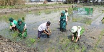 Perempuan Tani HKTI Jatim Lakukan Tandur Bareng Petani