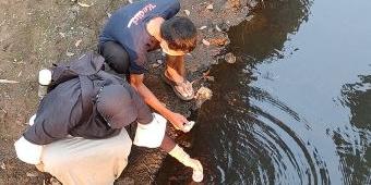 Sungai Kresek Diduga Tercemar Limbah, Aktivis Lingkungan Tes Lab Sampel Air