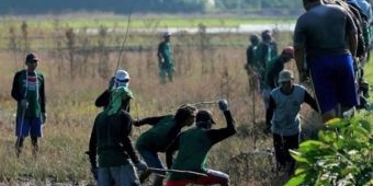 25.000 Tikus Mati di Tangan Petani, Disperta Bojonegoro Sebut Sukses