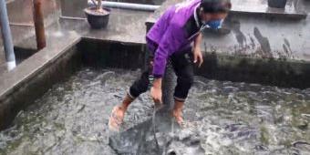 Wisata Edukasi Kampung Lele Desa Tales Tetap Eksis di Tengah Pandemi Covid-19