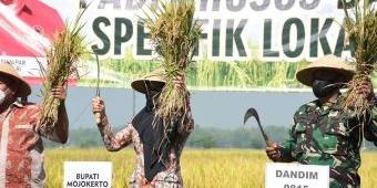 Diklaim Tinggi Zinc, Bupati Mojokerto Panen Beras Anti Stunting
