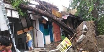 Selain Angin, Pembangunan Trotoar Jadi Penyebab Pohon Tumbang di Bojonegoro