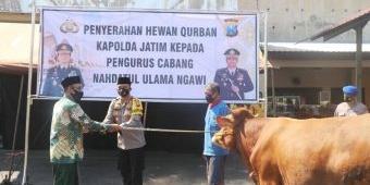 Polres Ngawi Serahkan Sapi Kurban ke NU dan Muhammadiyah