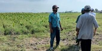 Dampak Rembesan Tambak Udang, 8 Hektare Lahan Produktif Petani Tercemar