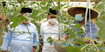 Kunjungi Wisata Green House Petik Buah Melon, Gus Barra Borong Melon untuk Dibagikan ke Warga