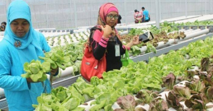 Gathering Hidroponik Se Indonesia Di Puspa Agro Dihadiri