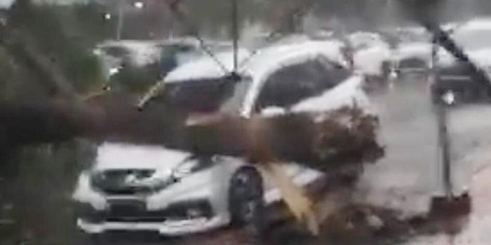 hujan-dan-angin-kencang-di-jember-sejumlah-pohon-tumbang-timpa-mobil-parkir